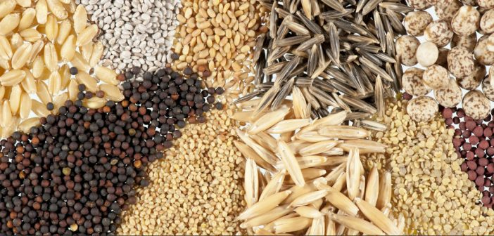 Choosing The Right Seed For Your Garden